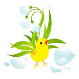 Easter Chick Royalty Free Stock Images
