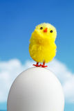 Easter chick Stock Images