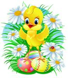 Easter chick. With eggs and daisy and ladybug