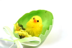 Easter chick. Yellow toy easter chick hatching out of an egg shell Stock Photos