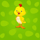 Easter Chick background Royalty Free Stock Photography