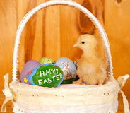 Easter chick in basket with rustic background Royalty Free Stock Photo