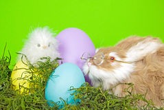 Easter chick and bunny with eggs Royalty Free Stock Photography
