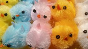 Easter Chick Chicken Decoration, Colorful Happy Fluffy stock photo