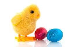 Easter chick with chocolate eggs Stock Images