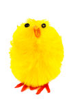 Easter chick with clipping path stock images