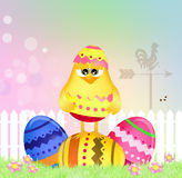Easter chick in the egg Stock Photos