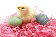 Easter Chick and Eggs. A closeup shot of an Easter chick and some eggs for the seasonal holiday Stock Image