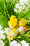 Easter chick and    eggs Royalty Free Stock Photos