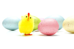 Easter chick with eggs Stock Image