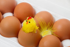 Easter Chick and Eggs Royalty Free Stock Images