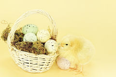 Easter Chick and Eggs. Little yellow chick by a basket full of Easter eggs against a yellow background with room for copyspace. Extreme shallow DOF Royalty Free Stock Photos