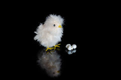 Easter chick. With eggs on a black background Stock Photos