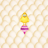 Easter chick in the eggs Royalty Free Stock Photo