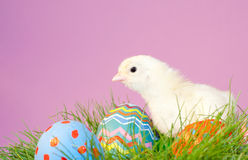 Easter chick with eggs on purple background Royalty Free Stock Images