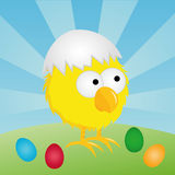 Easter - Chick with eggshell Royalty Free Stock Image