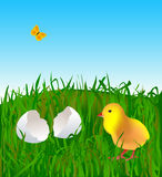 Easter chick on grass Stock Photography