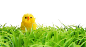 Easter Chick On Green Grass. Stock Photo