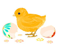 Easter chick. Hatched from Easter eggs isolated on white background Stock Photos