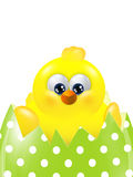 Easter chick hatching from colorful egg isolated over white Royalty Free Stock Photography