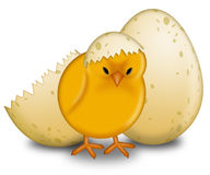 Easter Chick Hatching with Eggs Stock Image