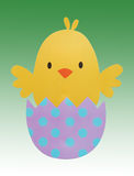 Easter Chick Hatching on green gradient background Stock Images