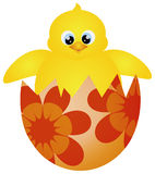 Easter Chick Hatching Illustration Stock Photo
