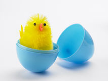 Easter Chick Hatching Out Of Egg. Against White Background Royalty Free Stock Photos