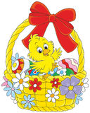 Easter Chick. Little yellow chicken sitting in an Easter basket with painted eggs, decorated with a red bow and flowers Stock Image