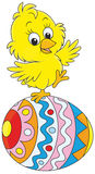 Easter chick Royalty Free Stock Image