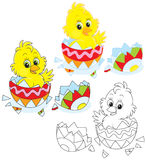 Easter Chick. Little yellow chick peeking out of an Easter egg Royalty Free Stock Photos
