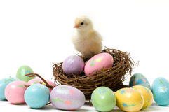Easter Chick in the Nest. A Cute Easter Chick in a Nest Surrounded by Color Eggs Royalty Free Stock Image