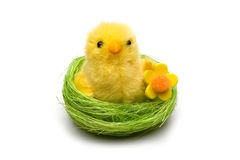 Easter chick in the nest Royalty Free Stock Photo