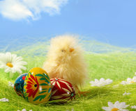 Easter chick and Painted Colorful Easter Egg Stock Photos