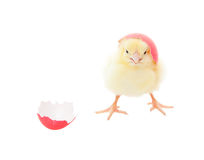 Easter Chick Pink Royalty Free Stock Photo