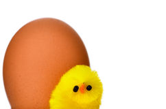 Easter chick with a rather large egg in the background. Royalty Free Stock Photos