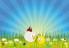 Easter - Chick and rooster on green meadow. With easter eggs and flowers Stock Image