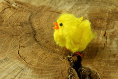 Easter chick on trunk Royalty Free Stock Photography