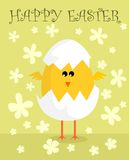 Easter chicken. Funny chick hatched from an egg Stock Images