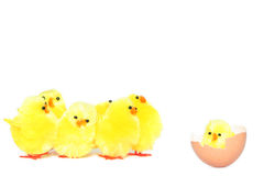 Free Easter Chicken Royalty Free Stock Image - 2032756