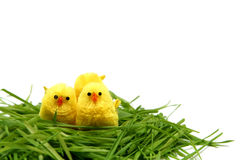 Easter chicken Royalty Free Stock Photo