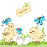 Easter chicken Royalty Free Stock Photos