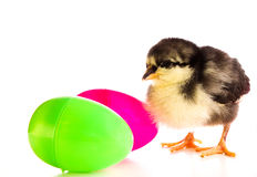 Easter Chicken. A baby chick with colorful Easter eggs royalty free stock photography