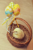 Easter chicken basket Royalty Free Stock Images