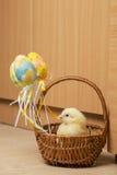 Easter chicken basket Stock Photos