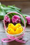 Easter chicken in a basket royalty free stock photography