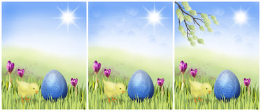 Easter chicken with blue egg on a sunny meadow Stock Image