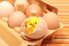 Easter chicken in broken eggshell with fresh eggs Stock Images