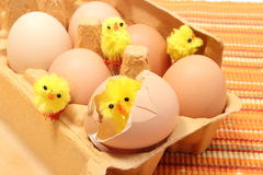 Easter chicken in broken eggshell with fresh eggs Royalty Free Stock Photography
