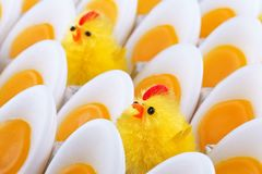 Easter Chicken, candles that look like eggs Stock Photos